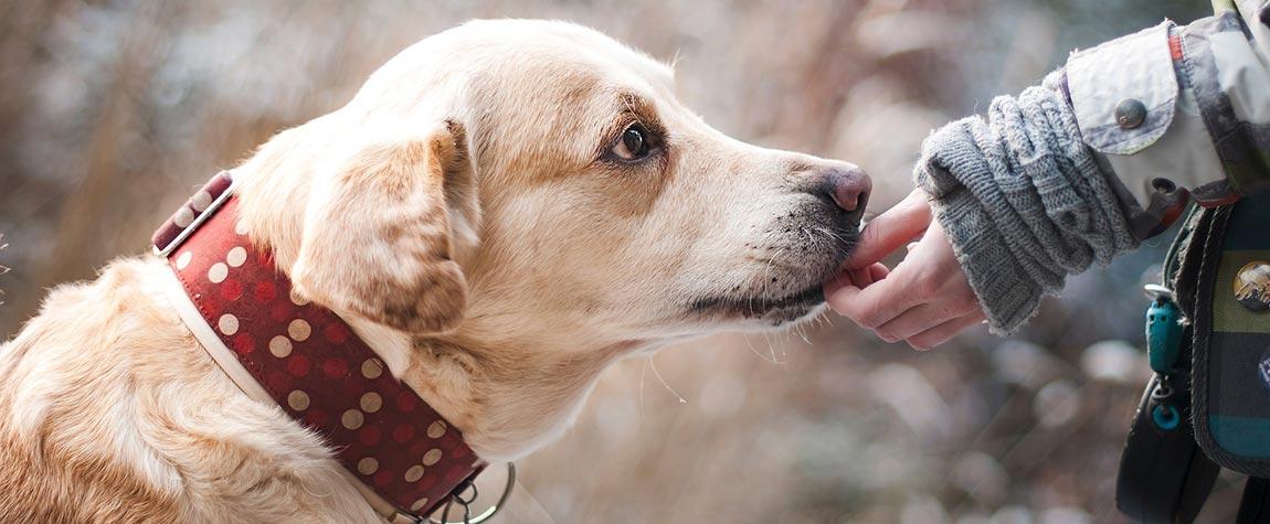 Gebe einem Hund aus unseren Tierheimen ein neues Zuhause