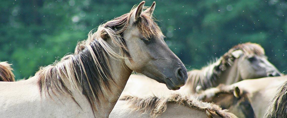 Artgerechte Tierhaltung geht uns alle an